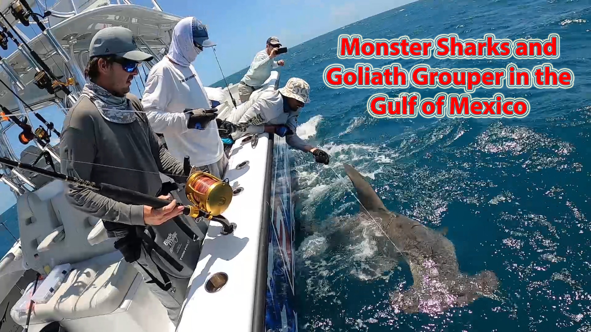 Monster Sharks & Goliath Grouper in the Gulf of Mexico!
