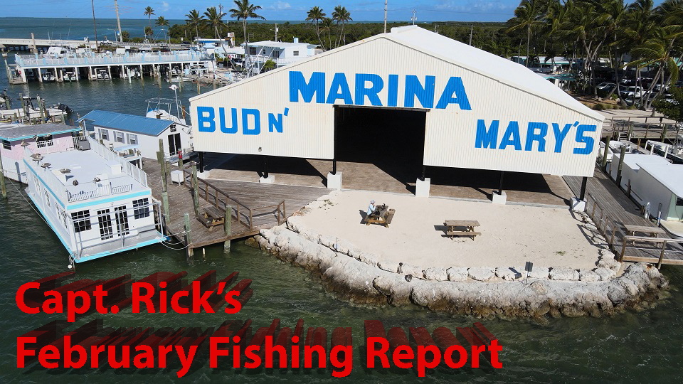 End of February fishing report for islamorada backcountry!